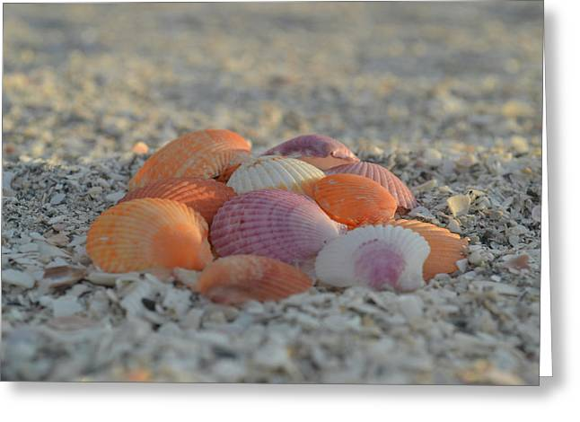Greeting Card featuring the photograph Colorful Scallop Shells by Melanie Moraga