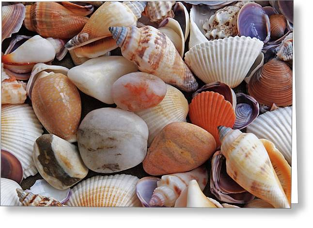 Colorful Shells And Pebbles Greeting Card by Gill Billington