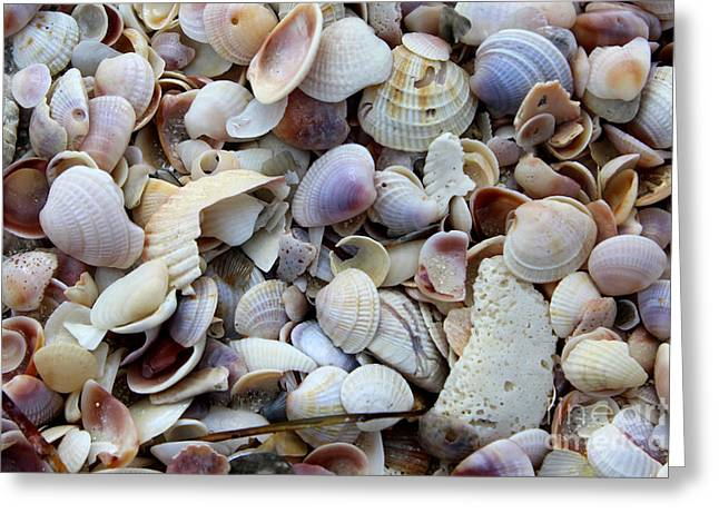 Colorful Shells Greeting Card