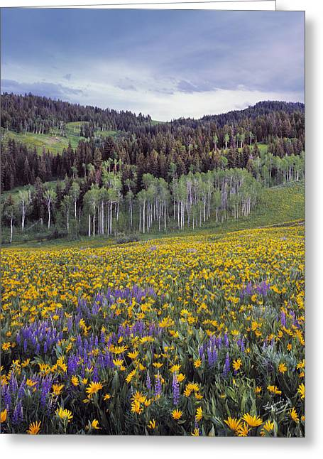 Colorful Spring Meadow Greeting Card