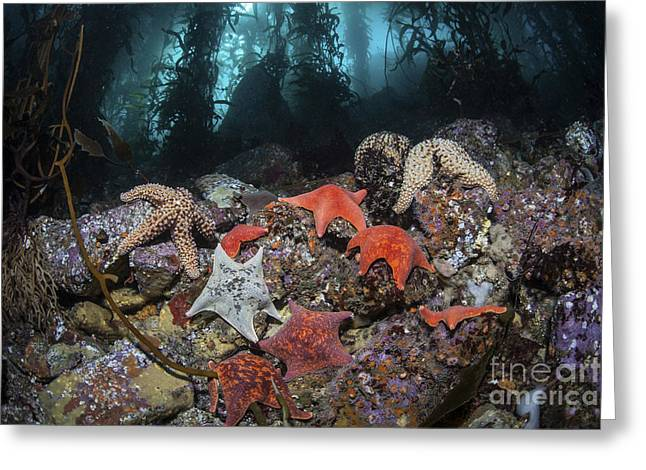 Colorful Starfish Cover The Bottom Greeting Card by Ethan Daniels