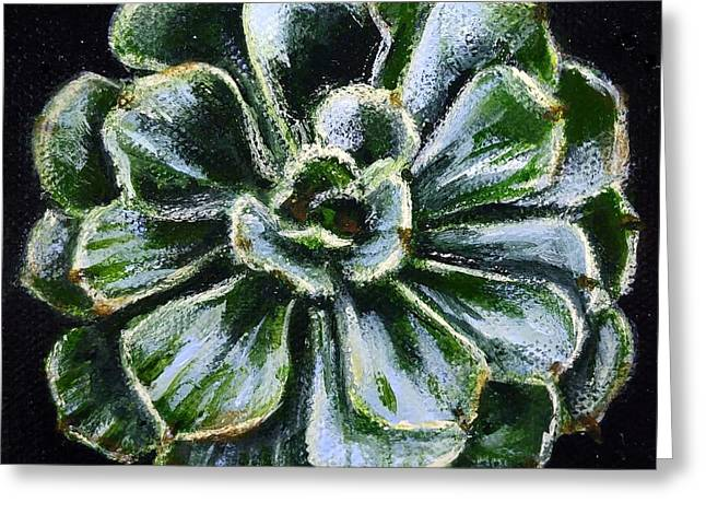 Colorful Succulent Greeting Card