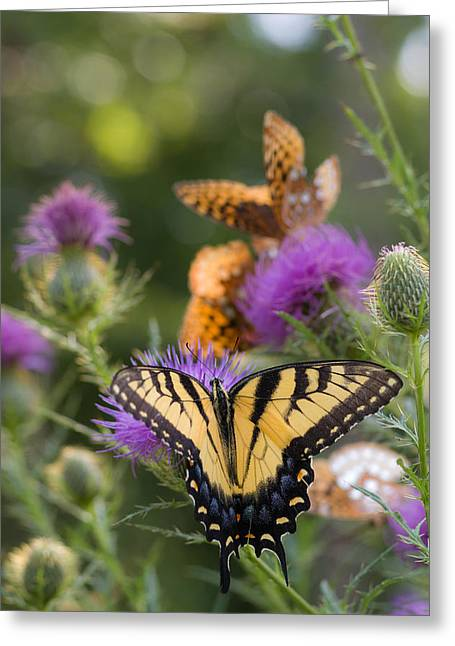 Colorful Summer Butterflies Greeting Card by Lori Coleman