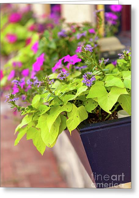 Colorful Summer Flowers In Window Box Greeting Card