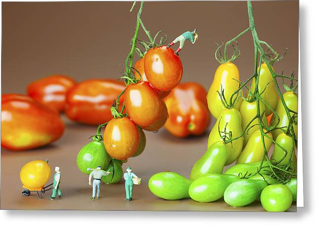 Colorful Tomato Harvest Little People On Food Greeting Card