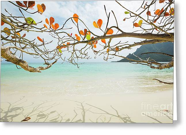 Colorful Tree North Shore Greeting Card