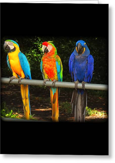 Colorful Trio Greeting Card