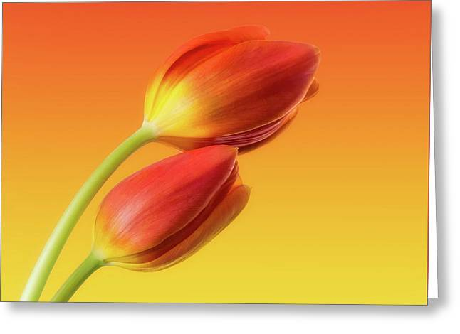 Colorful Tulips Greeting Card by Wim Lanclus