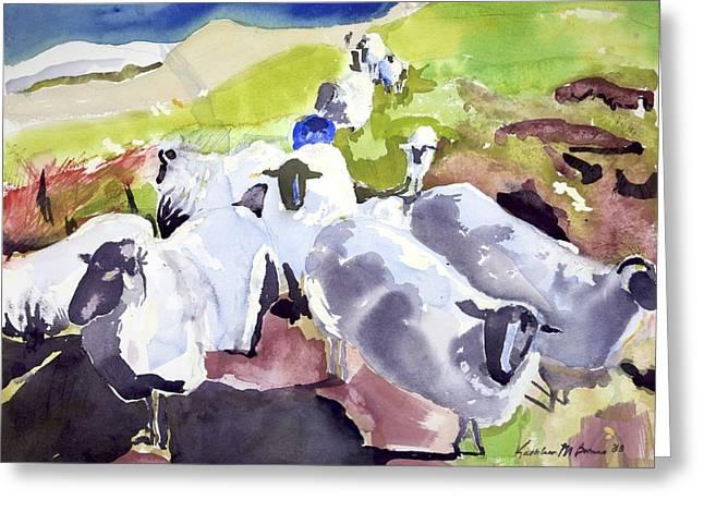 Colorful Waiting Sheep Greeting Card