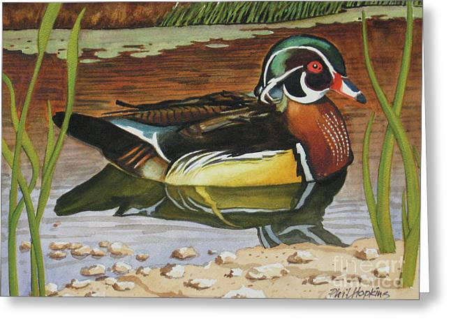 Colorful Wood Duck Greeting Card by Phil Hopkins