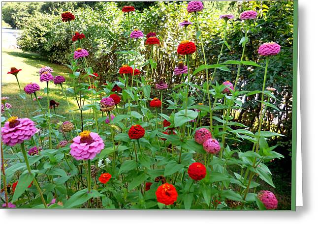 Colorful Zinnia Flowers 5 Greeting Card by Lanjee Chee
