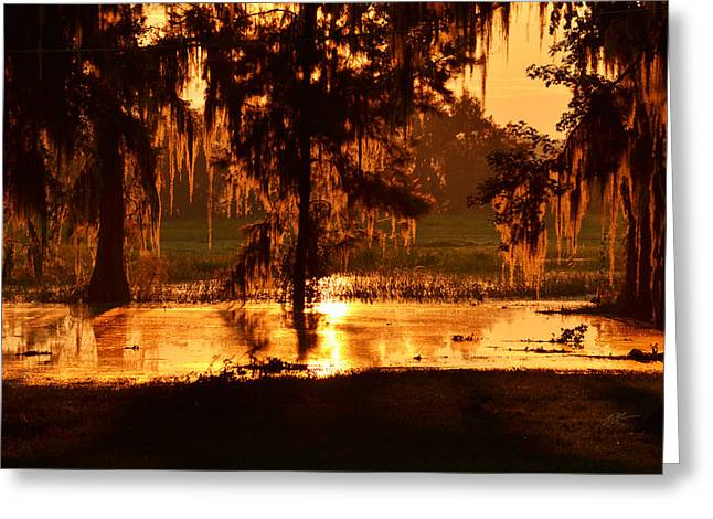 Coloring The Swamp With Sunrise Greeting Card