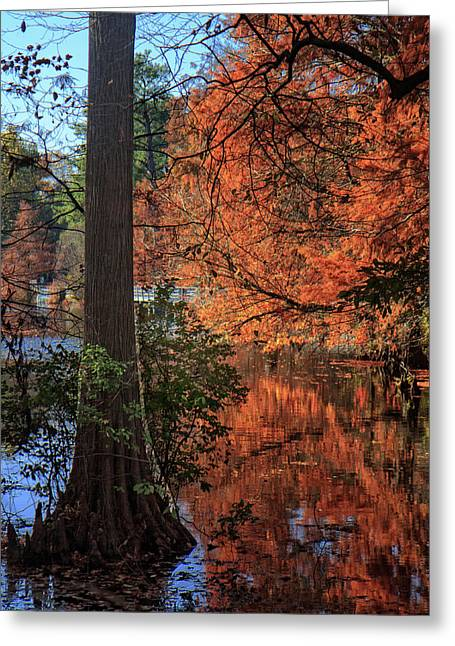 Greeting Card featuring the photograph Colors And Reflections At Trap Pond by Robert Pilkington