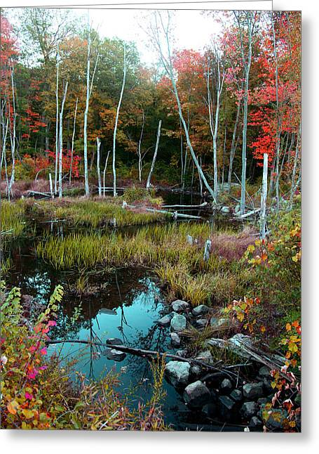 Greeting Card featuring the photograph Colors By The Stream by Joseph G Holland