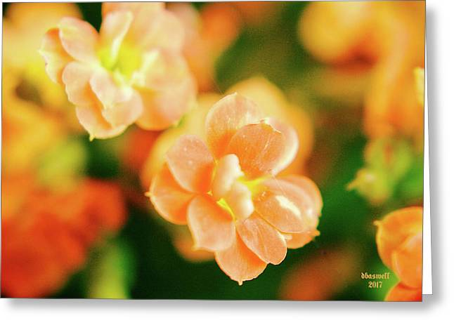 Colorful Dreams Greeting Card by Dennis Baswell