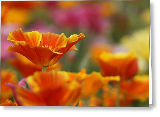 Colors Greeting Card by Eggers Photography
