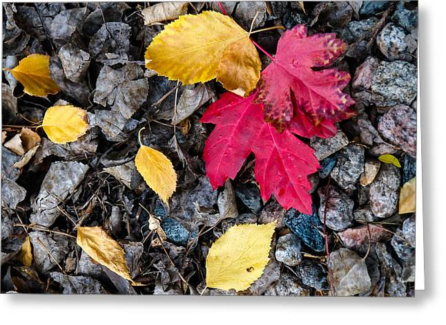 Greeting Card featuring the photograph Colors In Fall by Monte Stevens