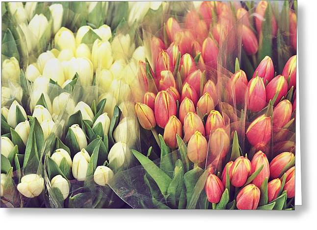 Colors In Gauze Greeting Card by JAMART Photography