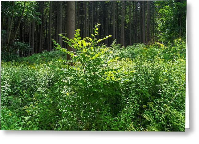 Colors Of A Forest In Vogelsberg Greeting Card