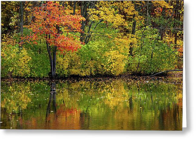 Colors Of Autumn Greeting Card by Karol Livote