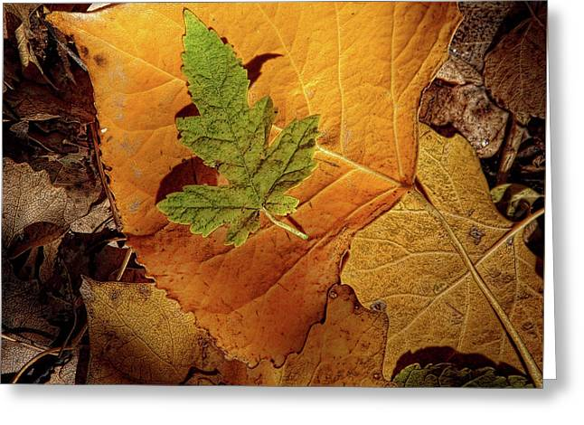 Greeting Card featuring the photograph Colors Of Autumn by Marie Leslie