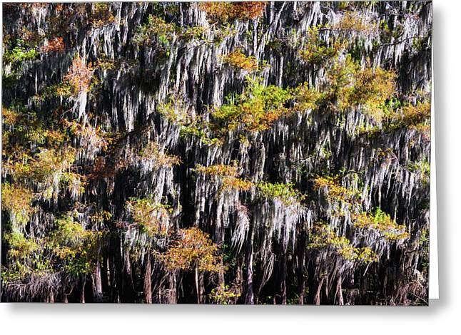 Colors Of Bald Cypress Greeting Card