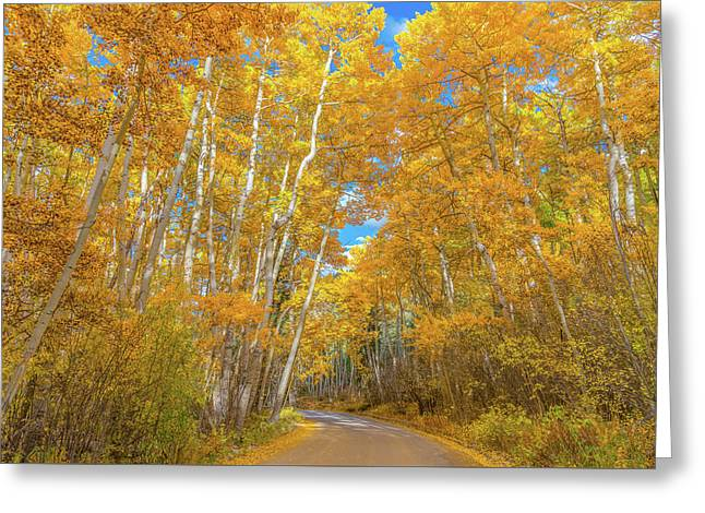 Colors Of Fall Greeting Card by Darren White