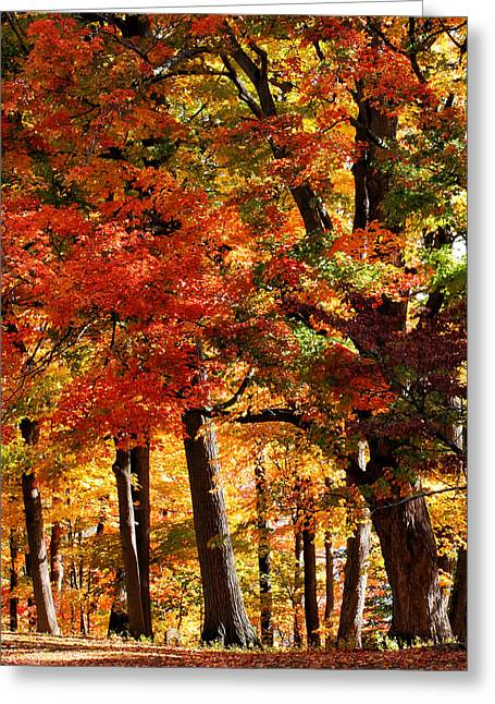 Colors Of Fall Greeting Card by William Selander