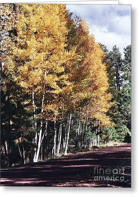 Greeting Card featuring the photograph Colors Of Greer by Juls Adams
