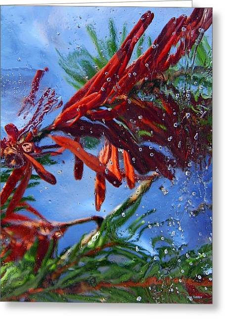 Colors Of Nature Greeting Card