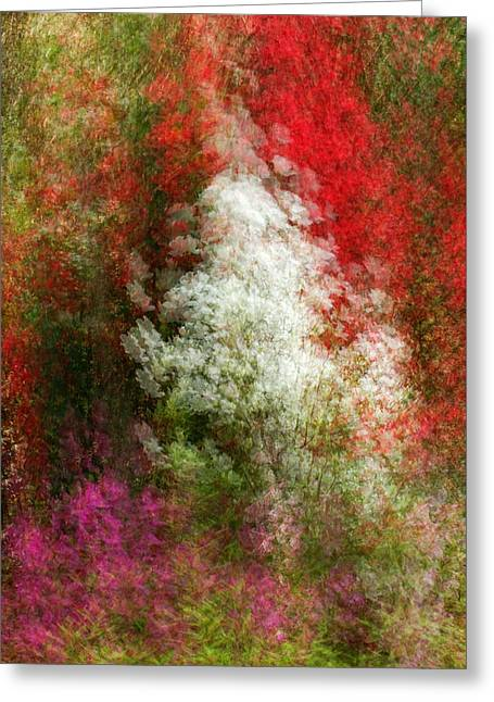 Colors Of  Paradise Greeting Card