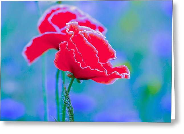 Colors Of Spring - Poppies 4 Greeting Card by Celestial Images