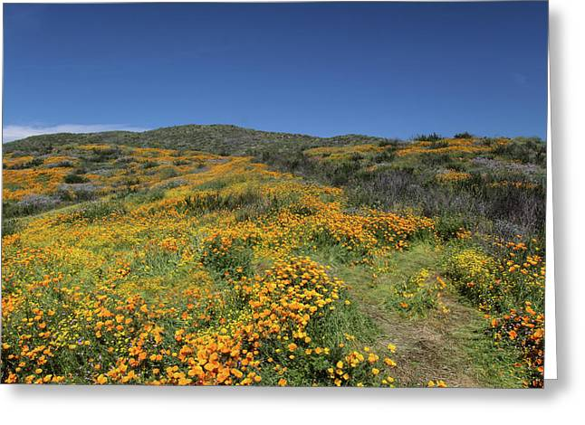 Greeting Card featuring the photograph Colors Of Springtime by Cliff Wassmann