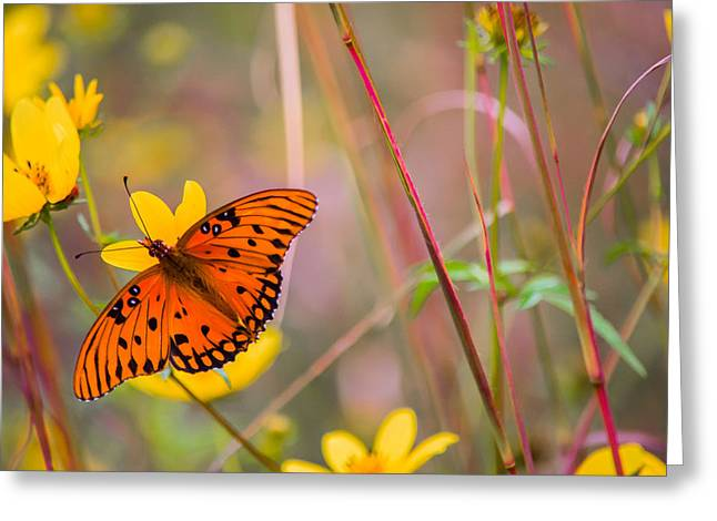 Colors Of Summer Greeting Card by Parker Cunningham