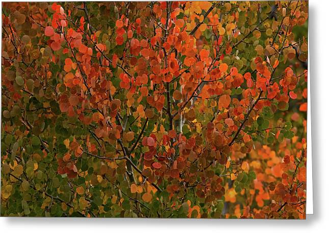 Colors Of The Aspen Greeting Card by Ernie Echols