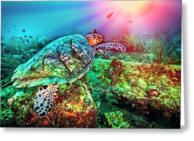 Colors Of The Sea In Lights Greeting Card by Debra and Dave Vanderlaan