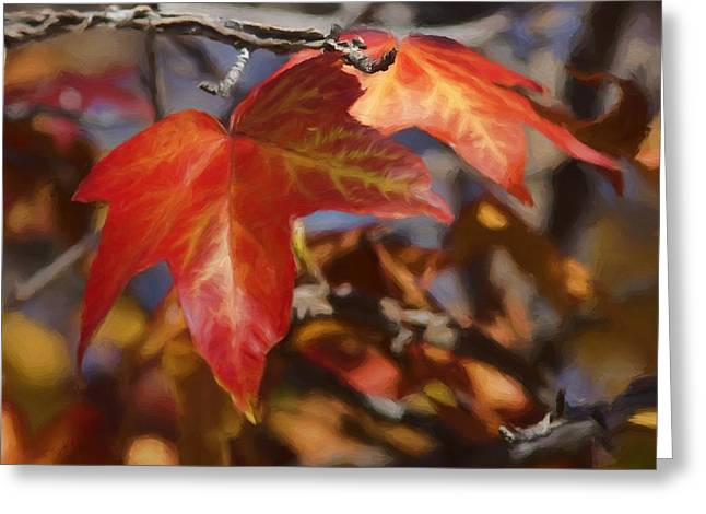 Colors Of The Sycamore Greeting Card by Ernie Echols