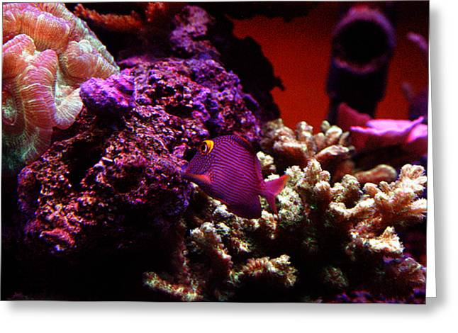 Colors Of Underwater Life Greeting Card