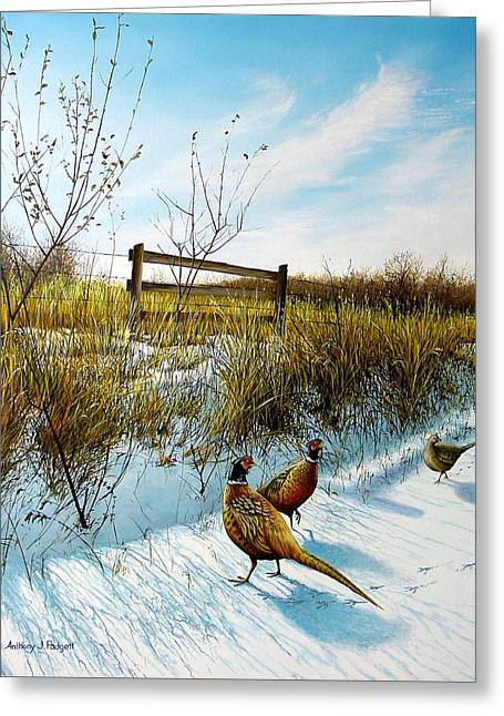 Colors Of Winter - Pheasants Greeting Card
