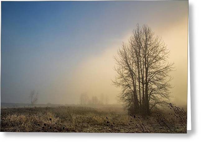Colors Of Winter Sunrise Greeting Card by Kunal Mehra