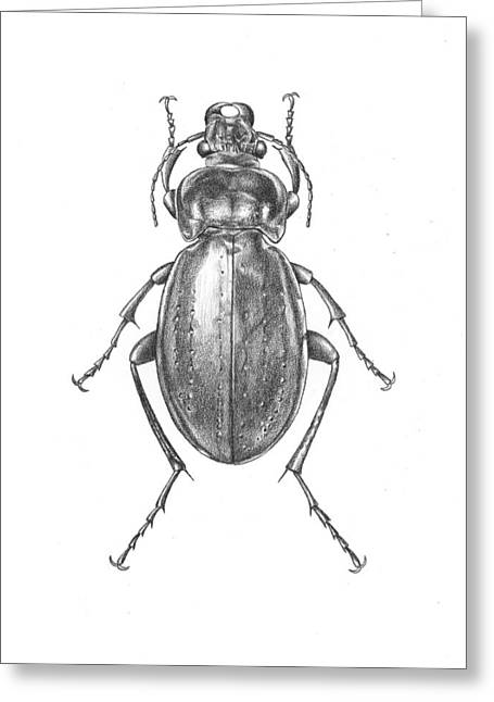 Colosma Beetle Greeting Card by Logan Parsons
