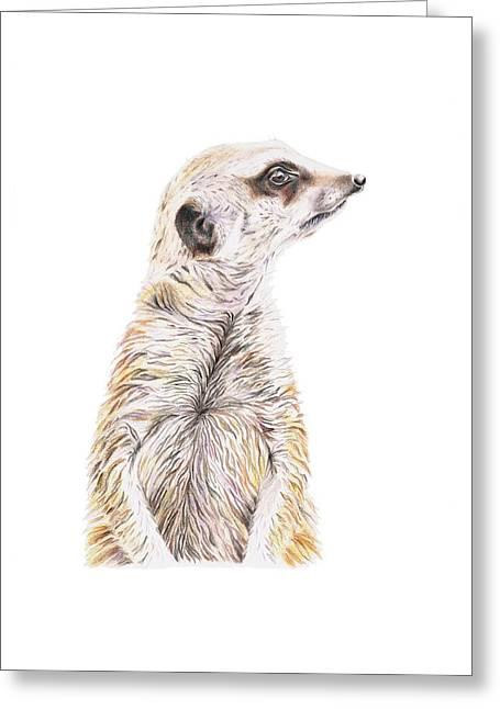 Colour Meerkat Greeting Card by Elizabeth Lock