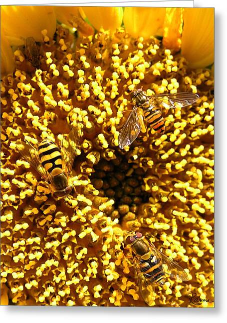 Colour Of Honey Greeting Card