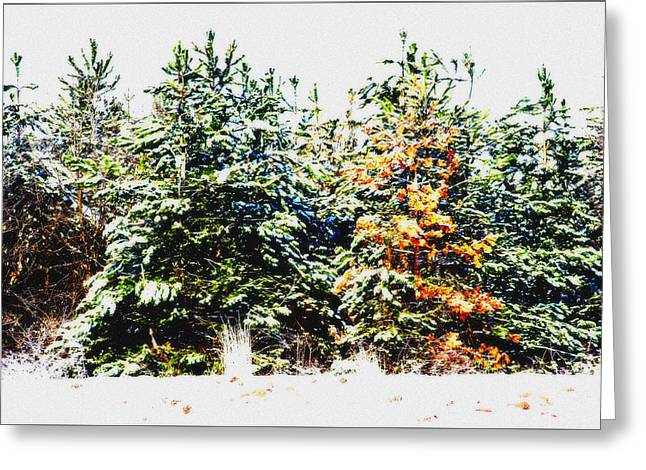 Coloured Trees  Greeting Card