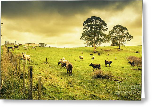 Colourful Australian Cattle Station Greeting Card by Jorgo Photography - Wall Art Gallery