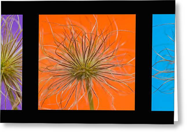 Colourful Crocus Triptych Greeting Card by Lisa Knechtel