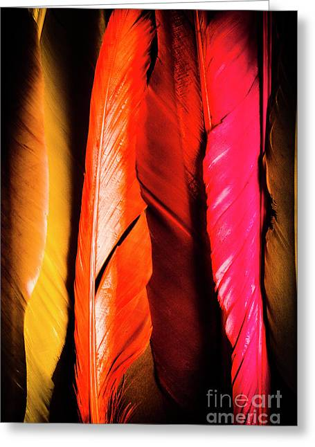 Colourful Feather Art Greeting Card