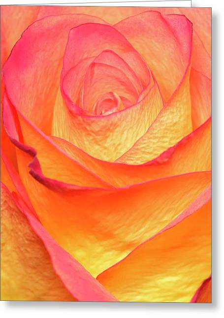 Colourful Rosie Greeting Card by Roy McPeak