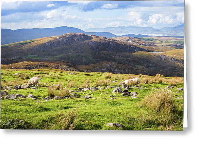 Colourful Undulating Irish Landscape In Kerry With Grazing Sheep Greeting Card by Semmick Photo