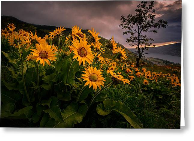 Greeting Card featuring the photograph Columbia Gorge Joy by Dan Mihai